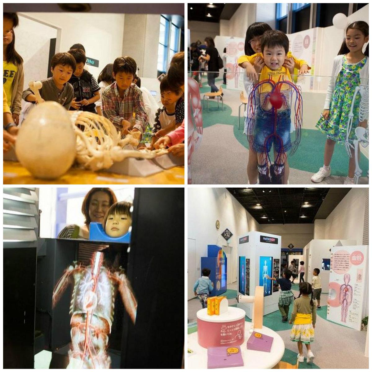 Kids Plaza Osaka human body