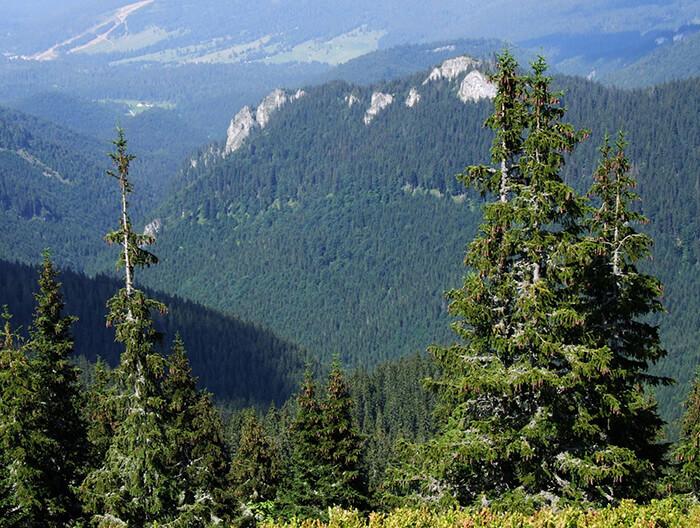 Zdroj: wikimedia