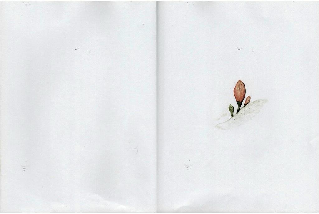 Kniha Ptáček a lev od Marianne Dubuc / Zdroj: Čítajme si spolu