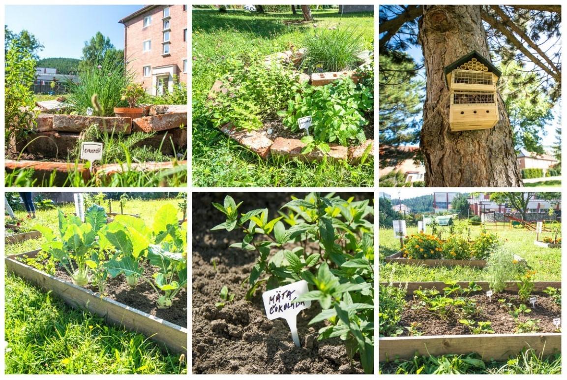 Komunitná záhrada vo Svite / Zdroj: Raiffeisen banka