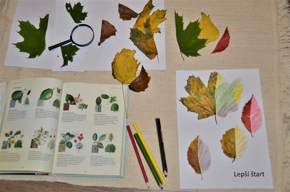 Dokresľujte listy. / Foto: Lacikova Danka