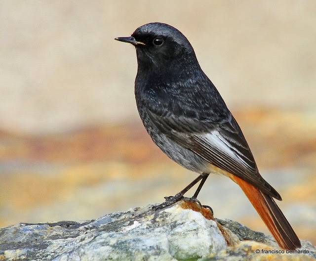 Zdroj: birdsofslovakia.blogspot.com