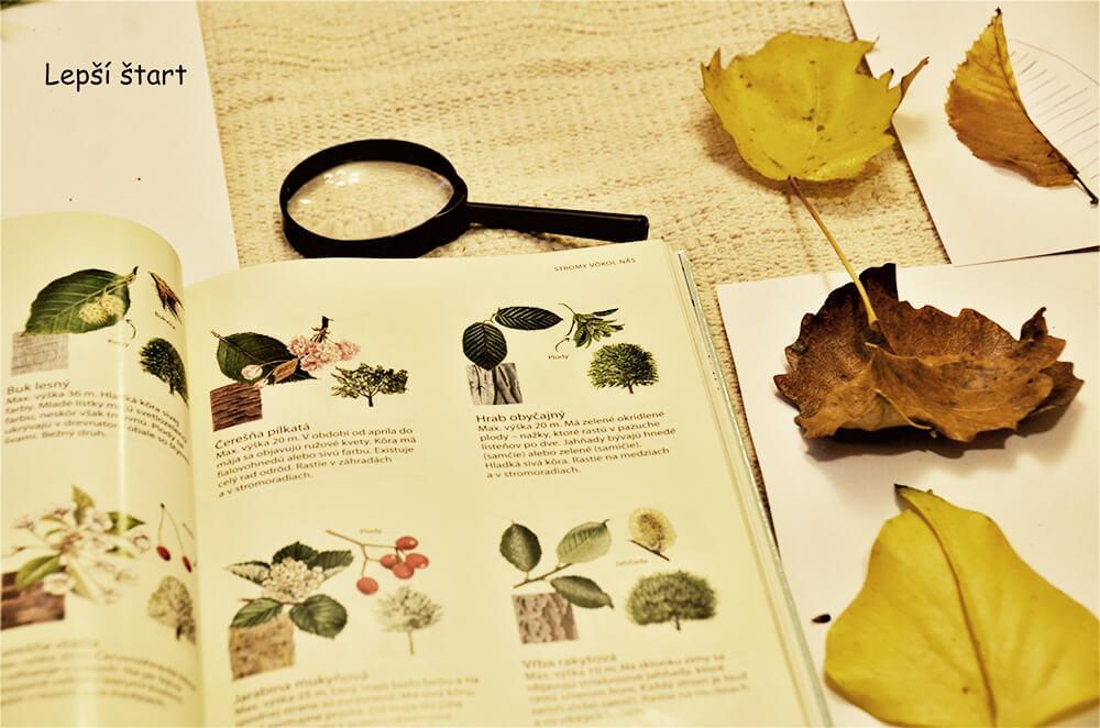 V knihe o listoch môžete na prechádzke hľadať listy, ktoré nájdete v prírode. / Foto: Danka Lacikova