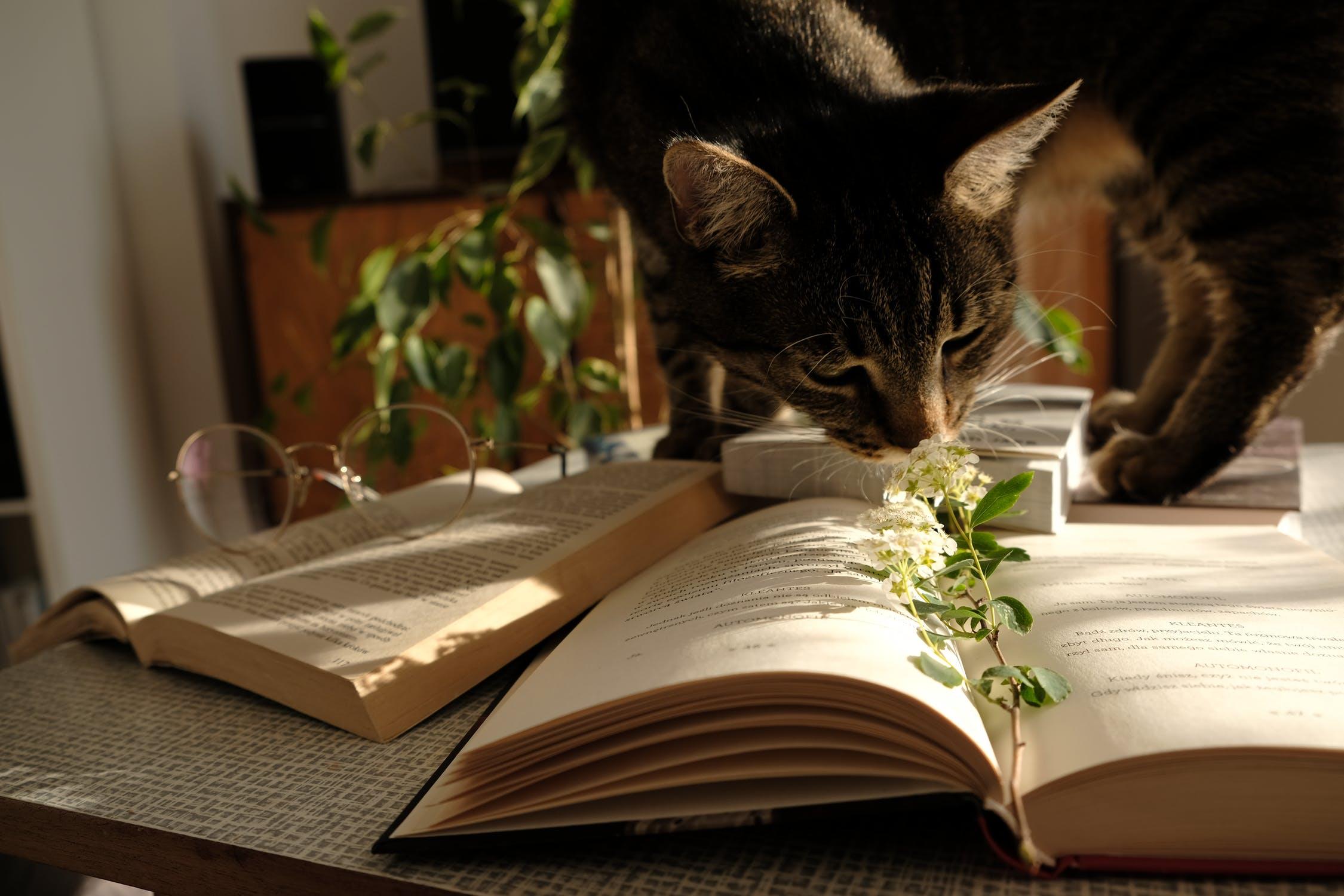 Izbové rastliny zvyšujú aj spokojnosť pri práci. / Foto: Pexels