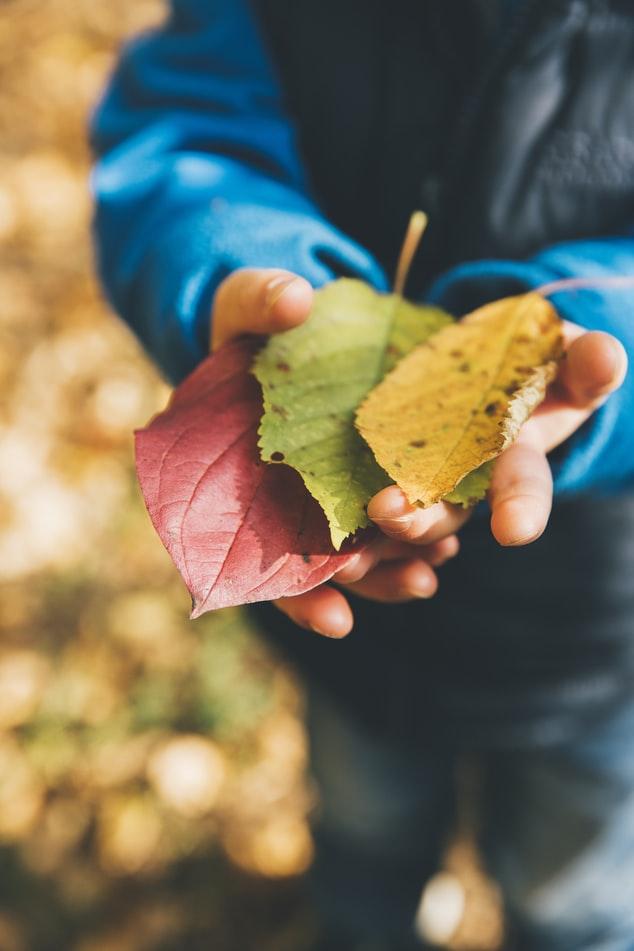 Zbieranie jesenných listov a počítanie / Zdroj: Unsplash