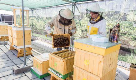 Bratislava má prvý včelí hotel