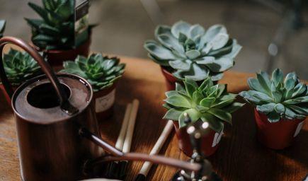 Prečo sa vďaka izbovým rastlinám cítite lepšie?