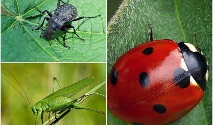 Poznajú vaše deti chrobáčiky? Zoznámte ich s tými najznámejšími!