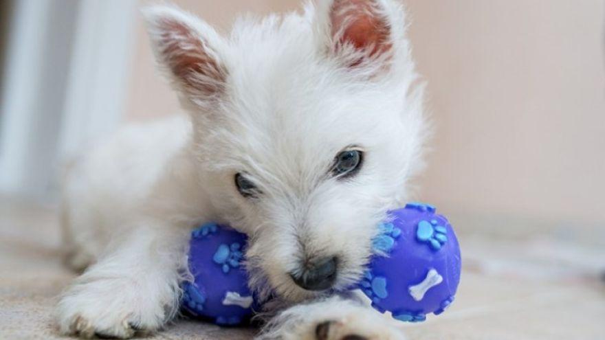 Vyrobte si s deťmi hračky pre psíkov