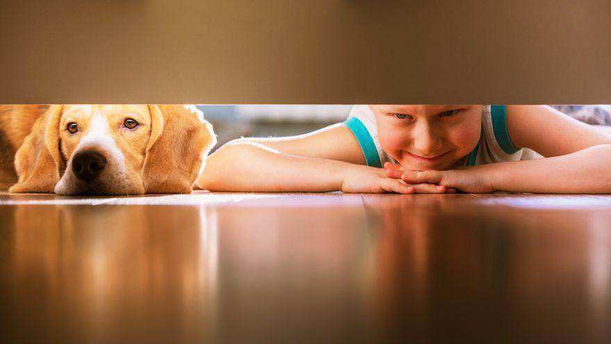 Zábavné hry pre deti s domácim psíkom