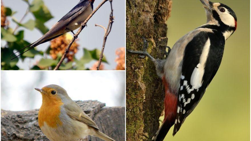 Poznajú vaše deti tieto vtáčiky? Zoznámte ich s tými najznámejšími!