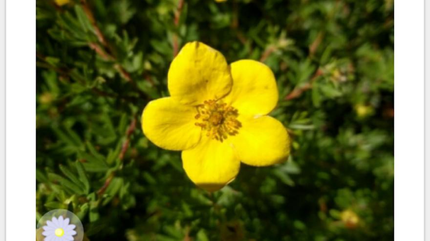 Pl@ntNet aplikácia o prírode a rastlinách