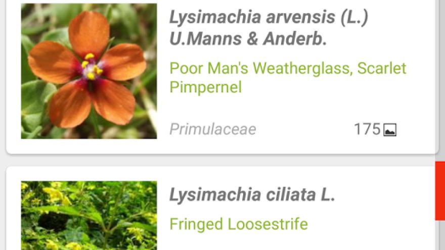 Pl@ntNet aplikácia o prírode a rastlinách #3