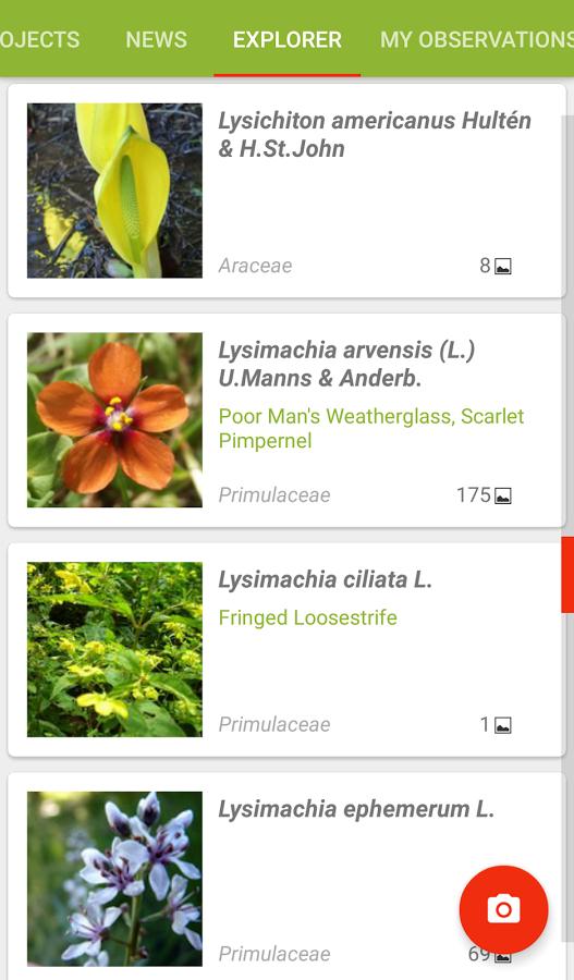 Neviete si na prechádzke spomenúť, čo je to za strom či rastlina? Aplikácia Pl@ntNet vám pomôže!